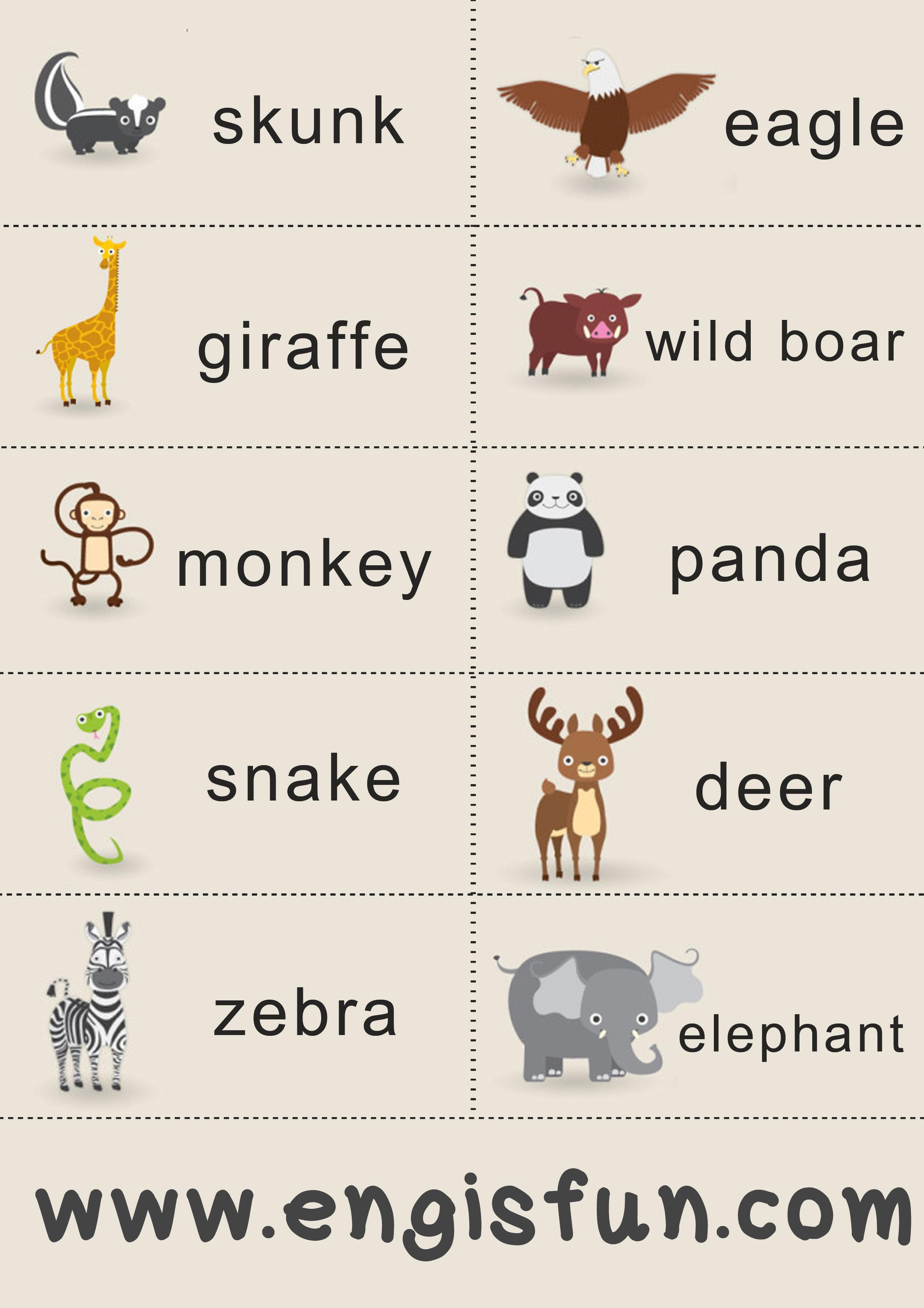 animals สัตว์ ภาษาอังกฤษ