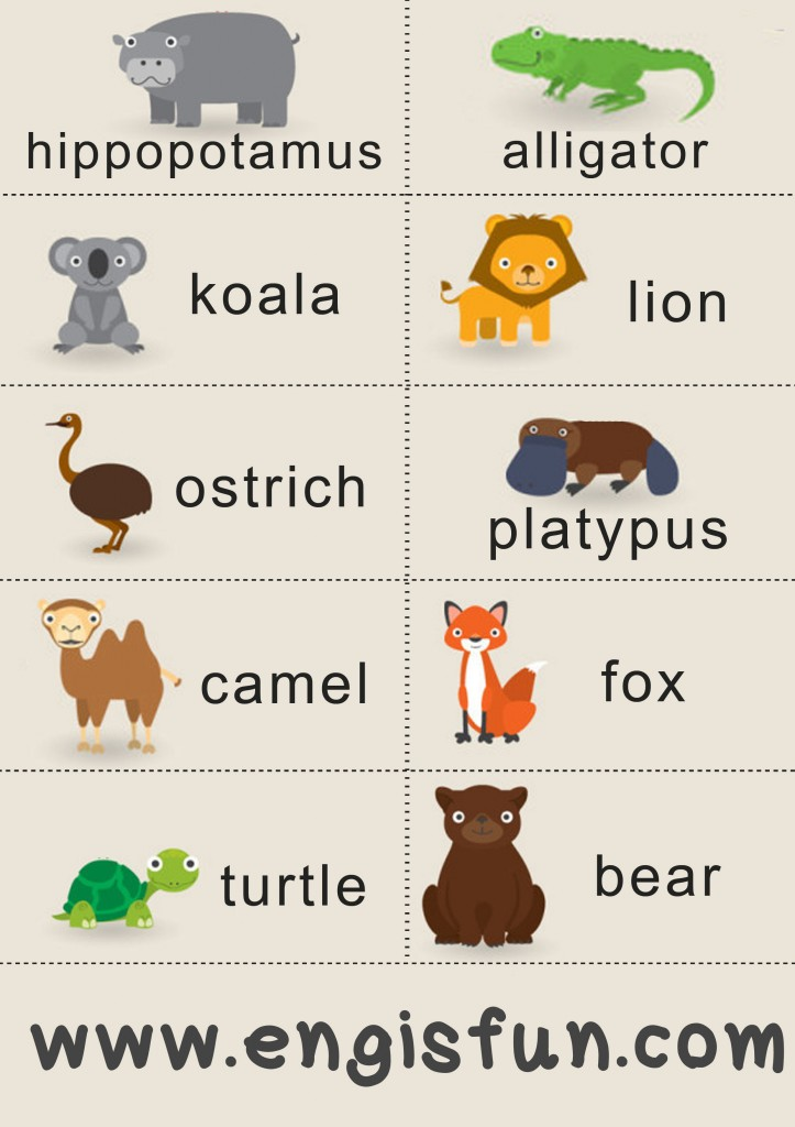 animals สัตว์ภาษาอังกฤษ